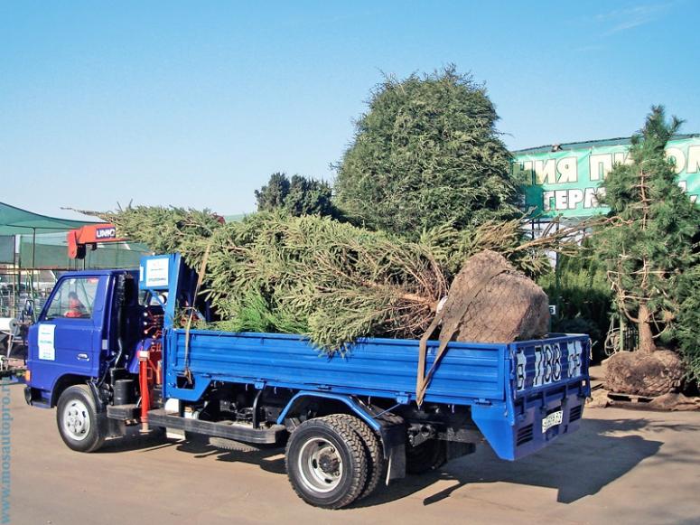 Перевозка деревьев